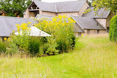 Grassy upper level of the garden with barn beyond and sunken seating area planted around with Rudbeckia laciniata and grasses.