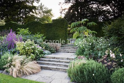 Steps leading up to the Knot Garden from the Croquet Lawn at Bourton House, Moreton-in-Marsh in August, planted with Stipa te...
