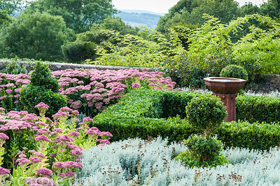 Terrace planted with box, Sedum 'Herbstfreude', santolina and Lavandula angustifolia 'Hidcote'. Perrycroft, Upper Colwall, He...