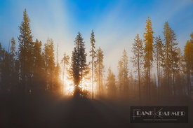 Misty mood in coniferous forest - North America, USA, Oregon, Deschutes, Cascade Lakes, Elk Lake (Cascade Range, Deschutes Na...