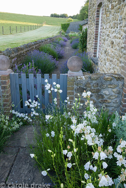Colour change is marked by a gate from white and silver of the rill garden to lush blues and mauves of lavender, catmint and ...