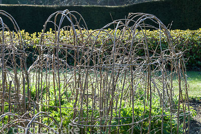 Hazel supports are woven in situ in the herbaceous borders that frame the croquet lawn. Melplash Court, Bridport, Dorset, UK