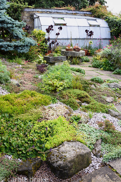 The Paved Garden with creeping plants including arabis, thymes, pulsatilla and alchemilla, stone troughs and pots of succulen...