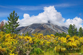 Mountain landscape with gorse - Oceania, New Zealand, South Island, Canterbury, Selwyn, Craigieburn Forest Park, Bealey (Poly...