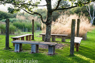 Quercus petraea, the sessile oak, planted in memory of Christina's brother Nicholas, surrounded by four benches, set in a fie...