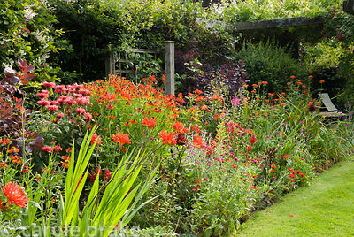 Border full of red shrubs and perennials including Cotinus coggygria 'Royal Purple', Crocosmia 'Lucifer', Lychnis chalcedonic...