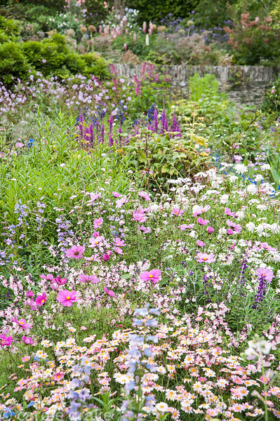 The Rill Garden was orignally planted with roses but now hosts a vibrant display of pastel colours from hardy and semi-tender...