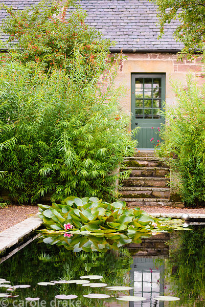 Lily pond surrounded by a willow hedge in the walled garden at Broadwoodside, Gifford, East Lothian in September