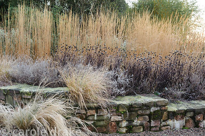 Planting pockets in the retaining wall of the grasses terrace are planted with Eragrostis curvula, with Nepeta 'Six Hills Gia...