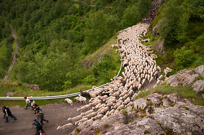 Transhumance in the Vicdessos