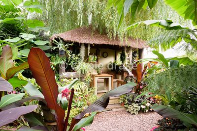 Lush foliage plants frame the Jungle Hut at Oak Barn, Newark, Notts in September including Paulownia tomentosa, Ensete ventri...