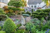 Stone eagle surrounded by clipped box, aquilegias, aubretia and Centaurea montana with shaped cotoneaster tree beyond. 24 Bud...