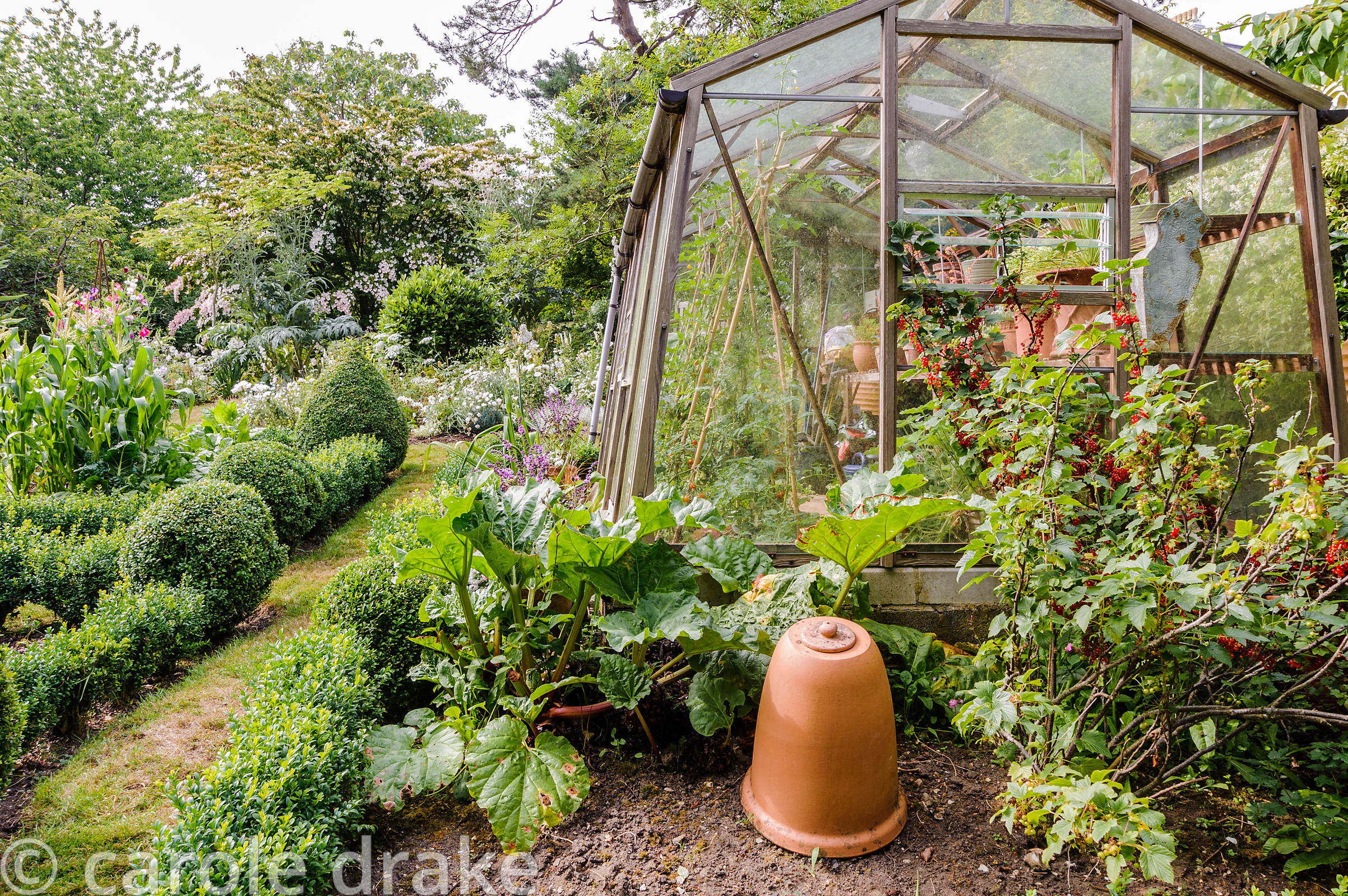 Greenhouse to the side of the decorative vegetable garden with currant bush and rhubarb in bed in foreground