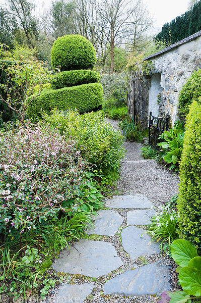 Stone and gravel path leads between flowering daphne, sarcococca, clipped box and an outbuilding. Plas yn Rhiw, Rhiw, Pwllhel...