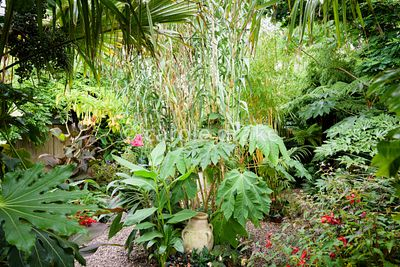 Decorative pot surrounded by lush planting including Tetrapanax papyrifer 'Rex', Canna iridiflora, Arundo donax and begonias,...