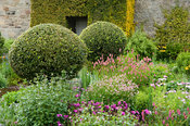 The Flower Garden features strong blocks of box and yew that frame cottage garden plants and flowers, here including persicar...