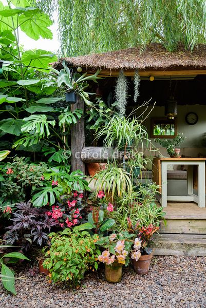 Jungle Hut constructed using recycled telegraph poles at Oak Barn, Newark, Notts in September.  Plants surrounding the entran...