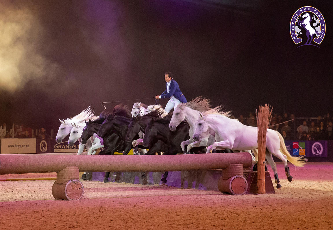 My Favourite HOYS 2019 Photo