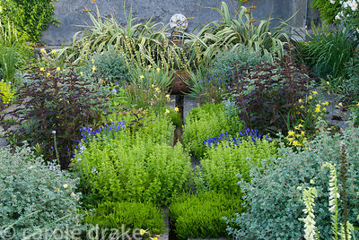Planting around raised rill includes soft green marjoram, white winter heathers, shrubby potentilla, deep brown Lysimachia ci...