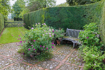 Yew hedges surround a cobble and brick area of paving decorated with bench and pots of scented pelargoniums