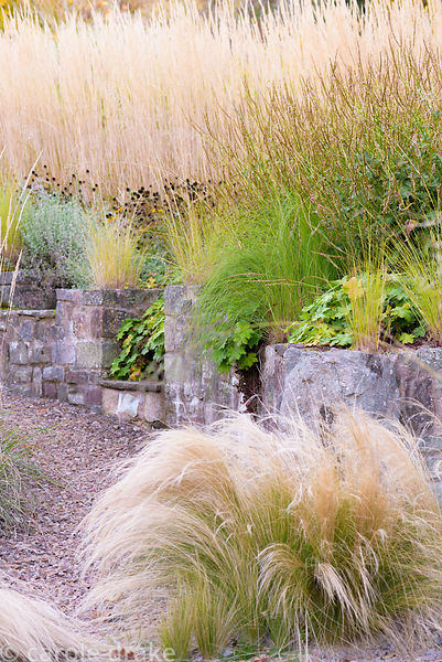 Stipa tenuissima in gravel with raised borders behind planted with small grass Eragrostis curvula, persicarias, Rudbeckia ful...