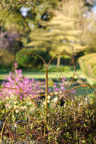 Willow and cornus stems are used as plant supports, tied to the top of metal railings, and shaped into attractive patterns, t...