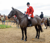 Major Tim Brown at the meet. The Cottesmore Hunt at Town Park Farm 7/1