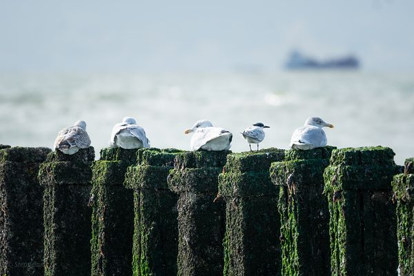 Sea birds on a breakwater with view over North Sea