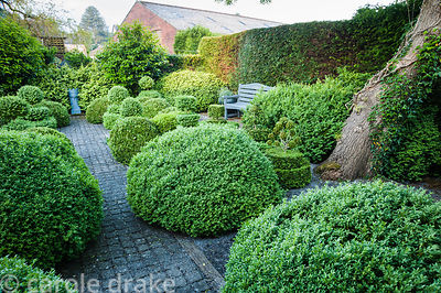 Topiary garden filled with low clipped box bushes a grey painted bench and chimney pot focal point. Tony Ridler's Garden, Coc...