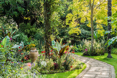 The Victorian Garden dominated by towering Chusan palms, Trachycarpus fortunei, surrounded by colourful beds of annuals inlcu...