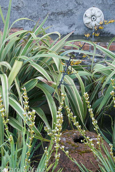 Variegated phormium and Sisyrinchium striatum frame a lumpy terracotta pot with water spout above feeding a simple tank that ...