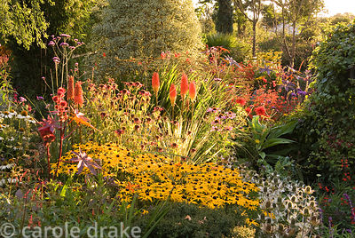 Sunken garden includes a vibrant mix of colourful perennials including rudbeckias, eryngiums, kniphofias, crocosmias and echn...