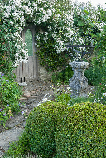 Sundial framed by Rosa 'Rambling Rector' and clipped box spheres.  Private garden, Dorset, UK