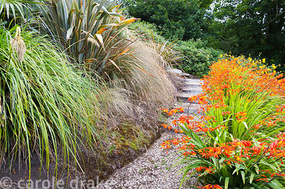 Phormiums, grasses and crocosmias line a path leading down the sloping garden