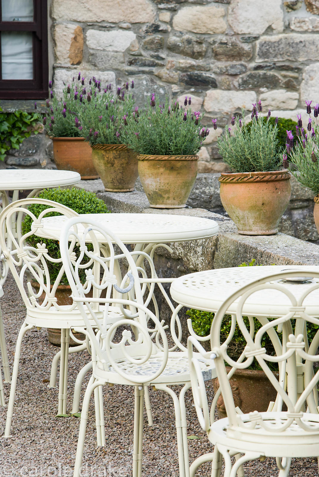 Chairs and tables on the terrace below a line of French lavender. Ednovean Farm, Marazion, Cornwall, UK