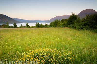 Meadow in the garden at 2 Durnamuck, Little Loch Broom, Wester Ross in July with the sea loch and mountains beyond