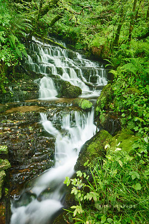 Waterfall in forest - Europe, United Kingdom, Northern Ireland, Fermanagh and Omagh, Fermanagh, Belcoo, Cadagh Glen - digital