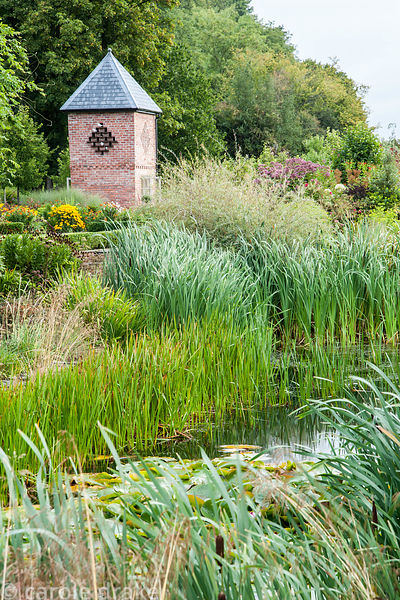 Wildlife pond surrounded by rushes and grasses, with dovecote beyond. Rhodds Farm, Kington, Herefordshire, UK