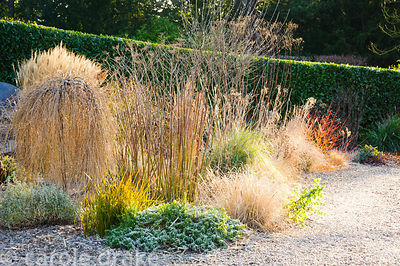 Morning sun illuminates the drive and the gravel garden full of grasses, shrubs and herbaceous perennials including Larix dec...