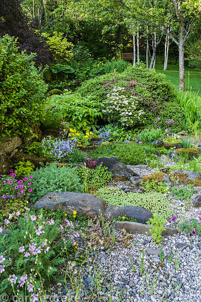 Rock garden including erodiums, omphalodes, briza and sedums.