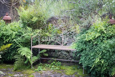 Metal bench framed by Adiantum capillus-veneris at Barn House, Gloucestershire in September