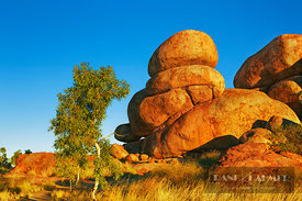 Rock formation at Devils Marbles with eucalyptus tree - Australia, Australia, Northern Territories, Devils Marbles (Red Cente...