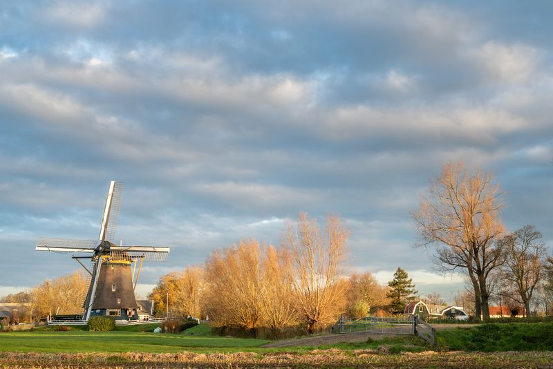 Windmill and farmhouses in Dutch morning landscape