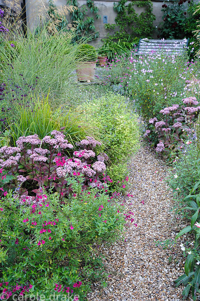 Gravel path leads between clumps of Sedum telephium 'Matrona', salvias and Miscanthus sinensis 'Morning Light' towards a rais...