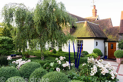 Front garden with weeping silver birch surrounded by clipped box, Rosa 'Penelope', bergenias and glass sculpture made by Hele...