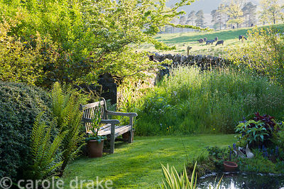 A bench near the pond catching the last of the evening sun, surrounded by ferns, irises and meadow plants.