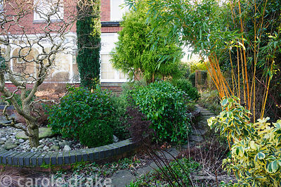 Robinia pseudoacacia 'Lace Lady' with millstone fountain in raised bed mulched with pebbles and shrubs including Hypericum Ma...
