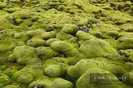 Moss landscape on lava rocks - Europe, Iceland, Southern Region, Kirkjubaejarklaustur, Land-brot - digital