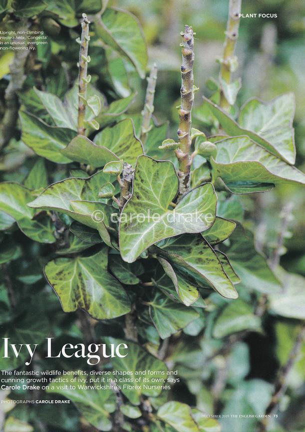Ivy League, The English Garden, December 2019