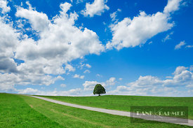 Lime tree and cumulonimbus clouds (lat. tilia) - Europe, Germany, Bavaria, Upper Bavaria, Miesbach, Irschenberg - digital - G...